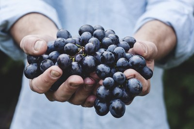 Ingestão de suco de uva integral na gravidez pode ajudar a prevenir doenças da mãe e dos filhos, aponta estudo do IPA