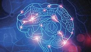 Neuroenvelhecimento Multidisciplinar